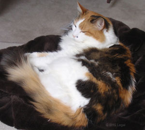 Cat, pets in wills, cats, provision for pets,