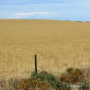 time limits, family provision, family provision law, farm, Western Australia, contest a will,